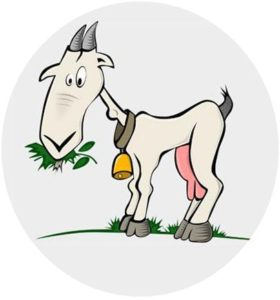 alimentation chèvre
